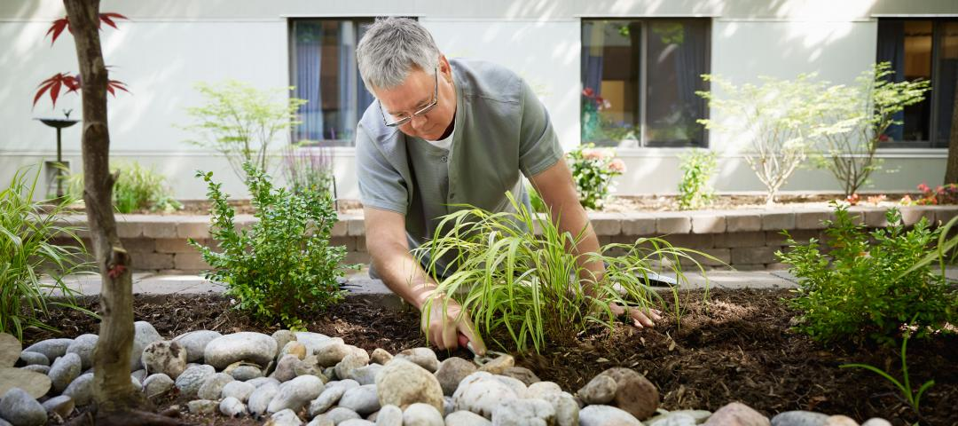 Garden Design Subject George Brown College Continuing Education